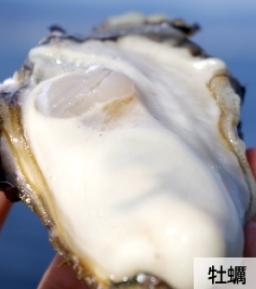 レバーザイム成分②_牡蠣エキス